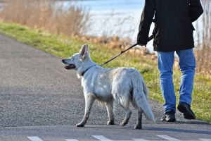 ¿Por qué los perros no ladran igual en inglés que en español?
