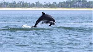 Delfines celebran haber sido liberados de las redes de pesca en las que quedaron atrapados.