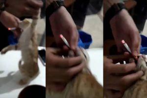 Se graban obligando a un gato a fumar, el vídeo que causa indignación