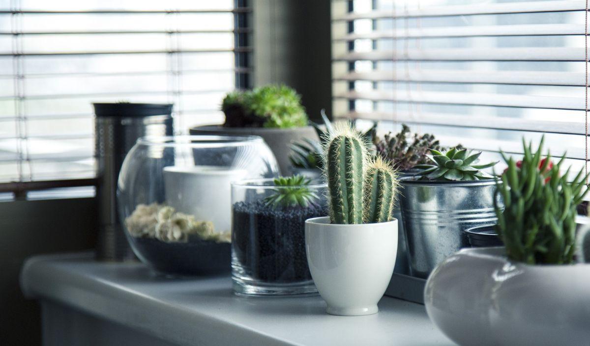 La planta que debes tener en casa, según tu signo zodiacal