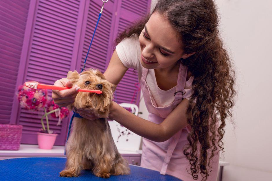 Los 4 mejores productos para cuidar la higiene bucal de tu perro