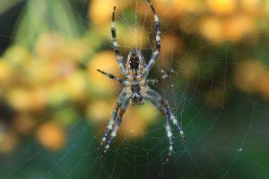 Por qué nunca hay que matar a las arañas que hay en casa