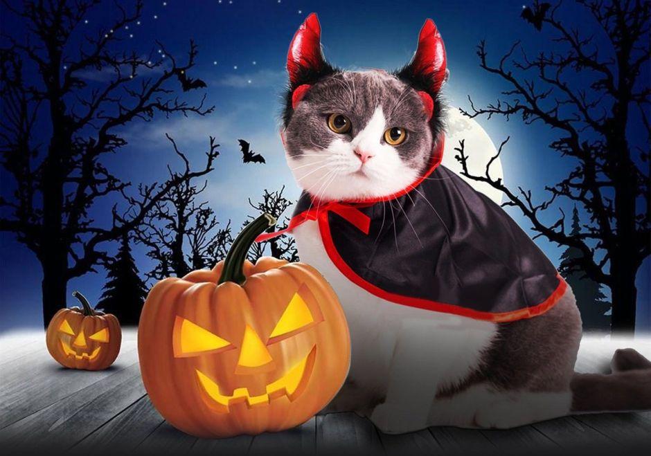 Los 6 mejores disfraces de Halloween para mascotas