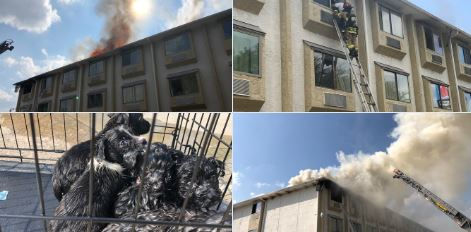 Houston: Niñera deja a niños solos y estos causan un masivo incendio en motel
