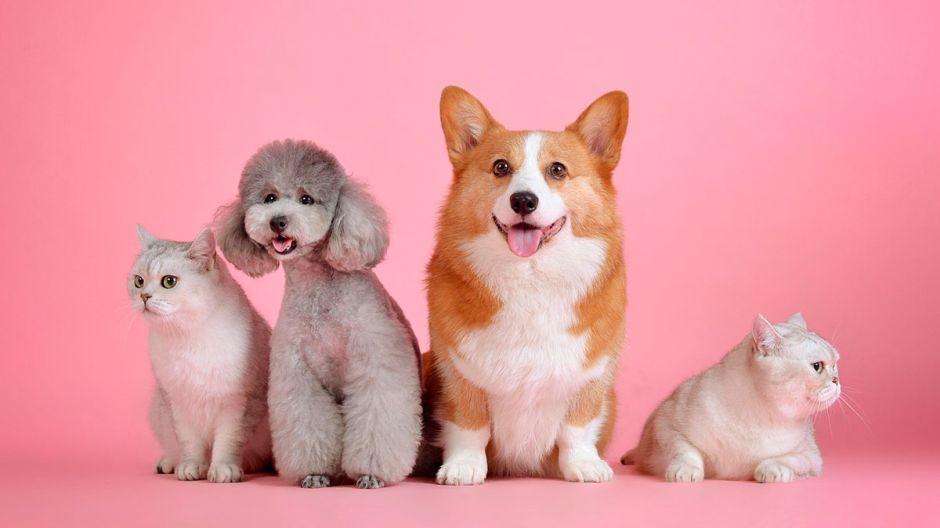 Perros, gatos, hurones y otras mascotas: ¿Cuánto cuesta mantener a cada una?