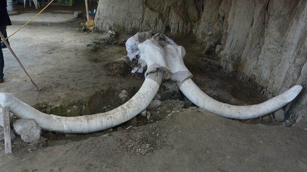Descubrir los restos de 14 mamuts en México cambia la idea de cómo cazaban nuestros ancestros