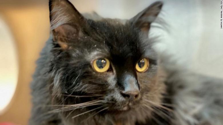Encuentra a su gata desaparecida por 5 años a 2,000 kilómetros de distancia