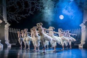 El ballet también es para los chicos: João Castro