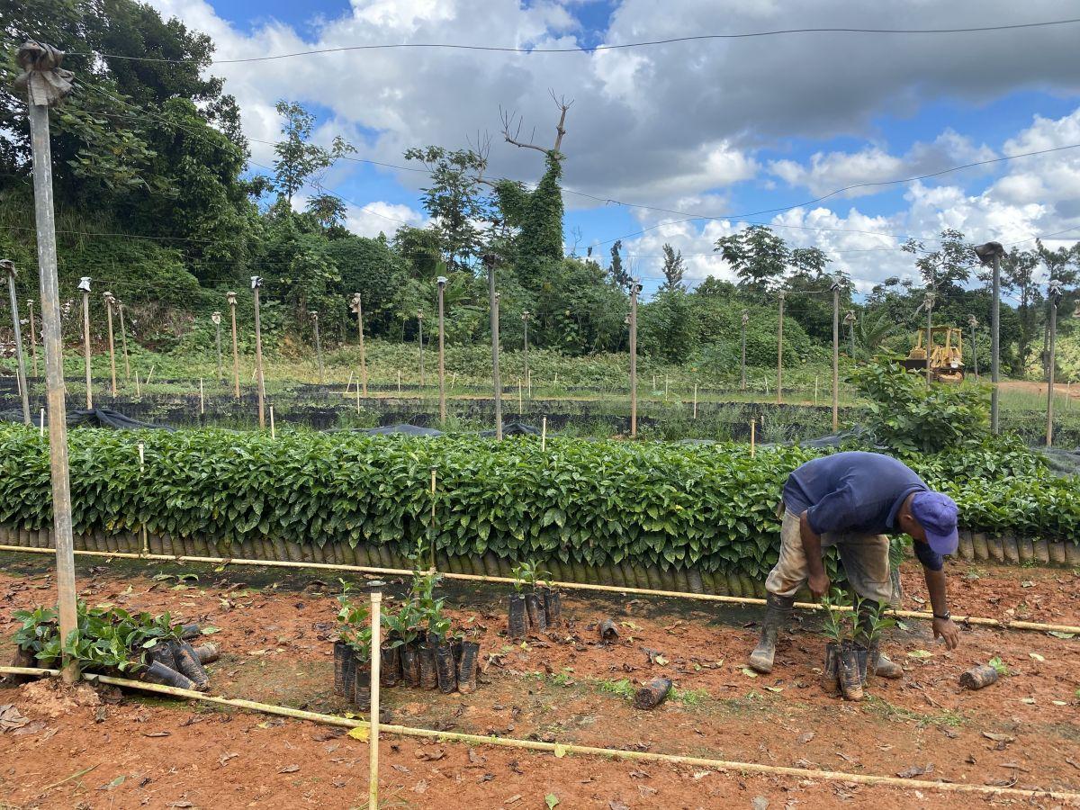 En la zona montañosa de Utuado los agricultores trabajan de sol a sol para poder recuperarse por completo de las secuelas del huracán María.