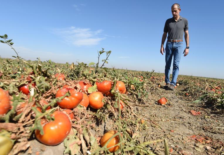 Campesinos temen pasar hambre, mientras el alimento se pudre en el suelo