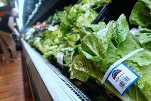 67 personas en 19 estados de EEUU se han enfermado por comer lechuga romana con bacteria E. coli