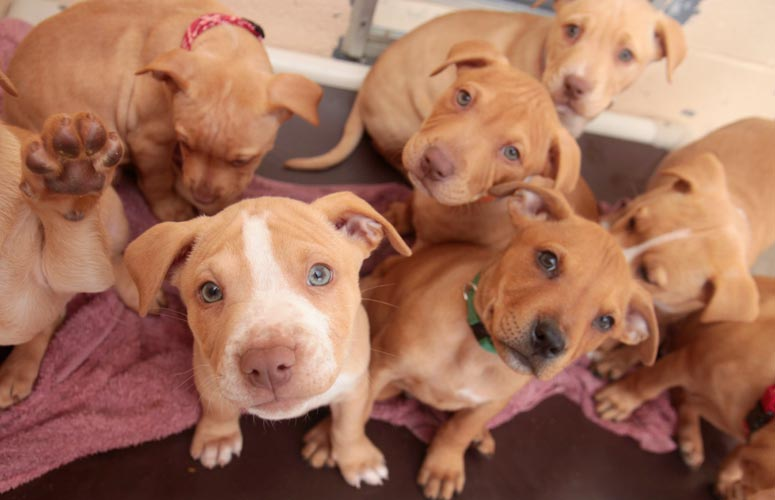 Metió a sus 46 perros en un U-Haul y los entregó en albergue de Los Ángeles