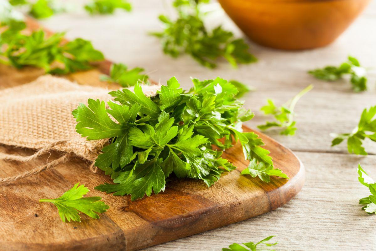 Prepara tus conservas caseras de chimichurri, es muy fácil de cocinar.