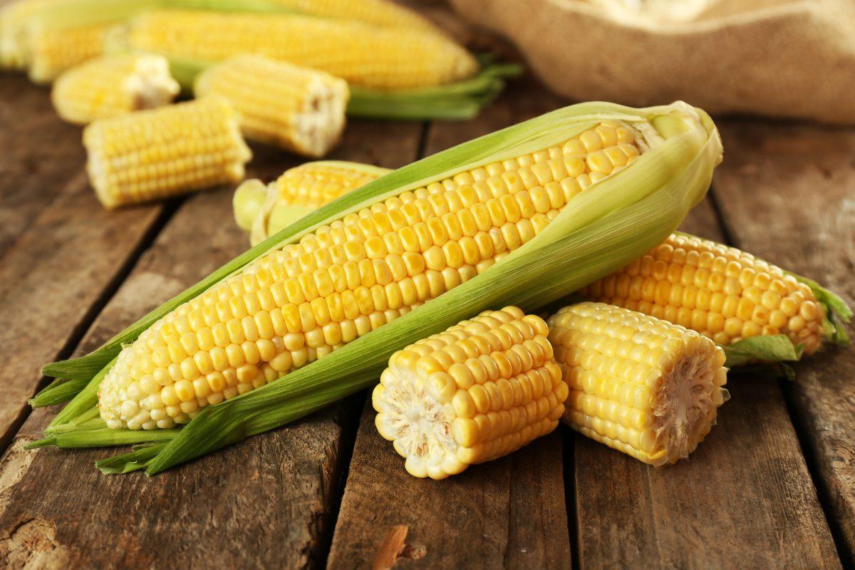 ¿Comer maíz nos hace engordar de más?