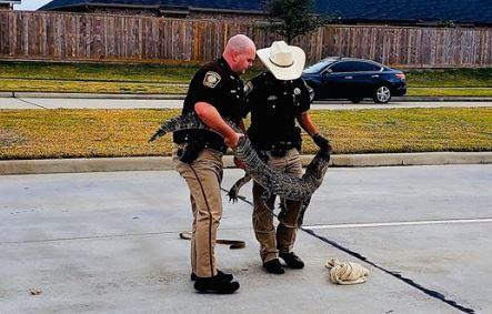 ¿Se le perdió a alguien su mascota? Pregunta la Policía