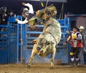 Toros, carneros y pelícanos: lo que viene en deportes en la Bahía