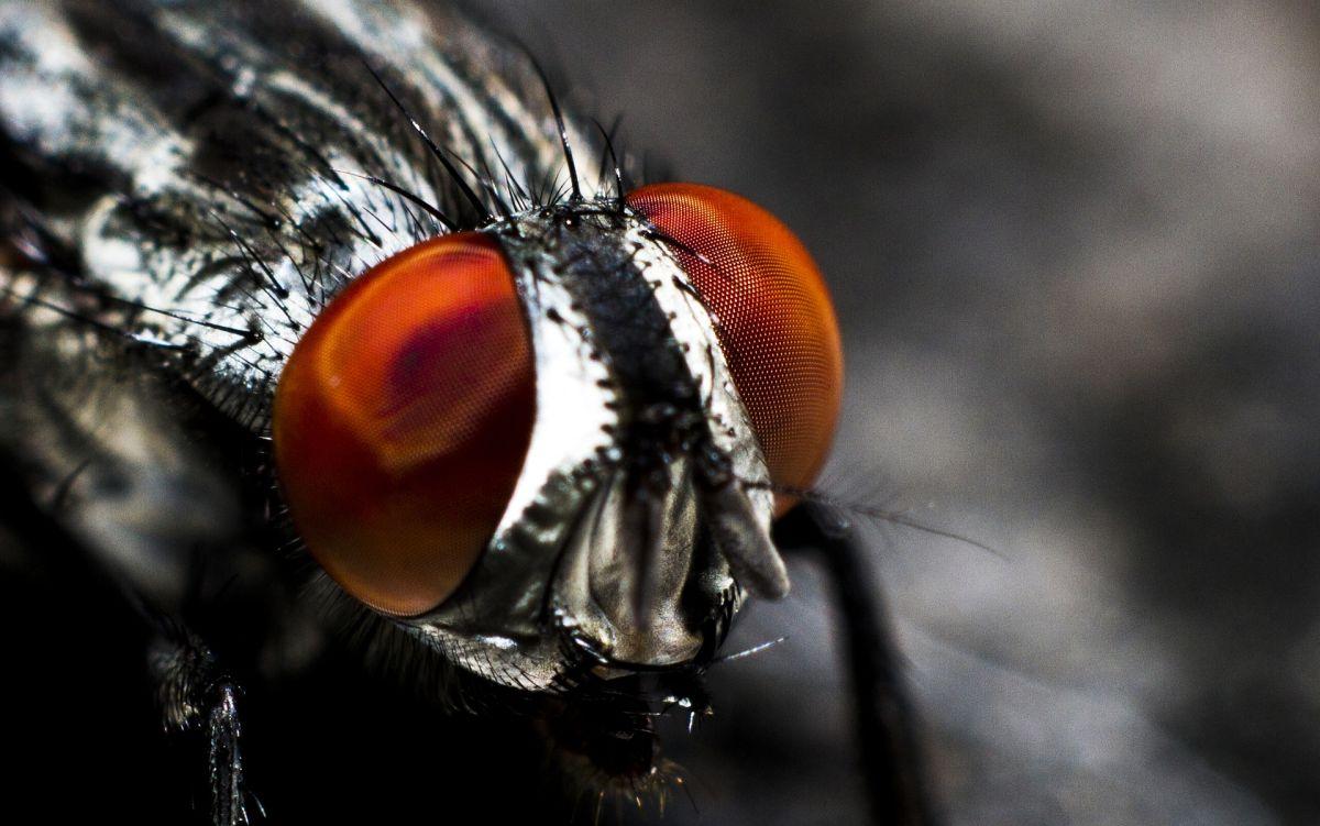 No te acostumbres a las moscas y elimínalas con estos sencillos métodos naturales