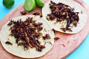 Conoce los insectos comestibles más populares de México