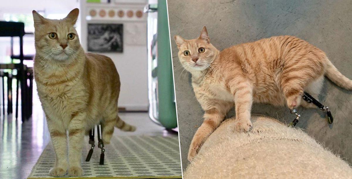 El gato biónico que conquistó la Navidad e Internet