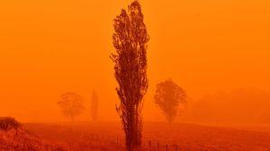 """La gran batalla para combatir el """"megaincendio"""" que se formó por la fusión de dos fuegos en Australia"""