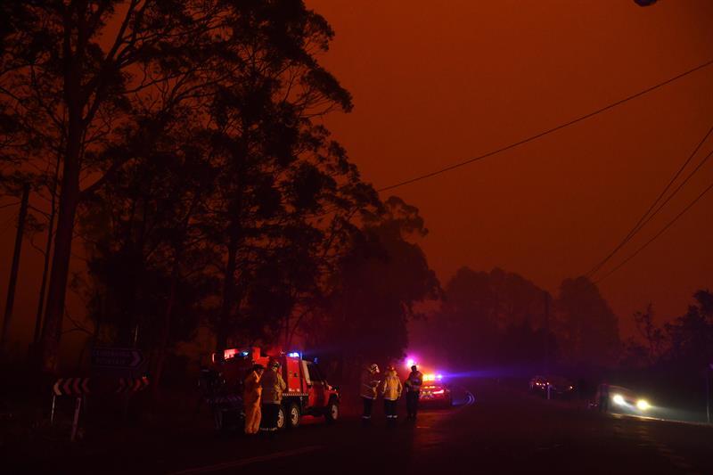 Al menos 480 millones de animales han muerto por incendios en Australia, estima la Universidad de Sídney