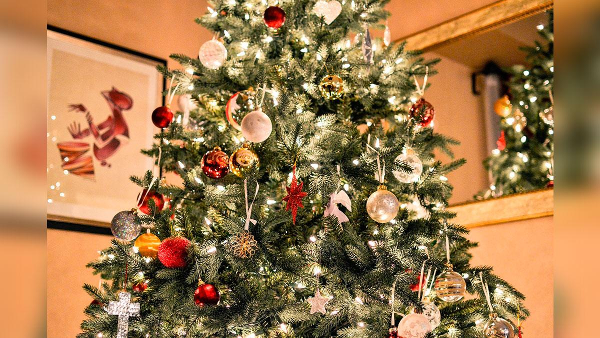 Encuentra un koala vivo en su árbol de Navidad