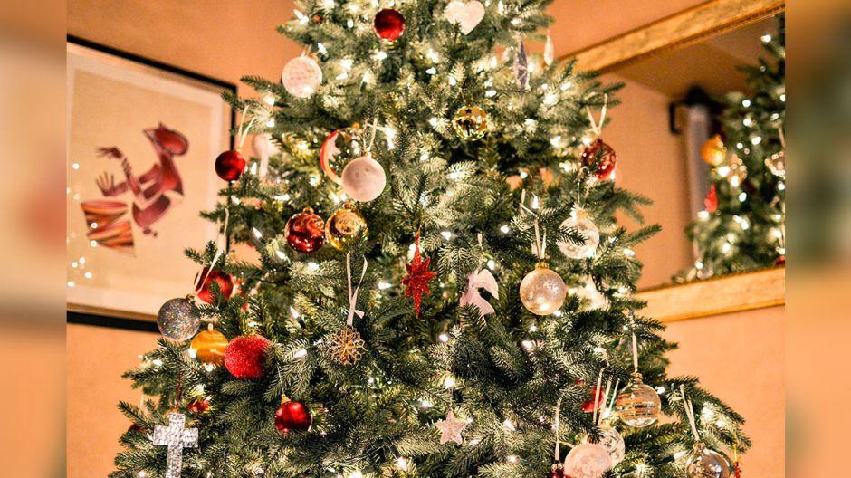 ¿Qué pasó con los arbolitos de Navidad que no se vendieron?