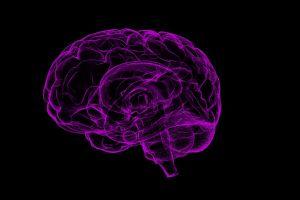 5 alimentos que agilizan tu mente