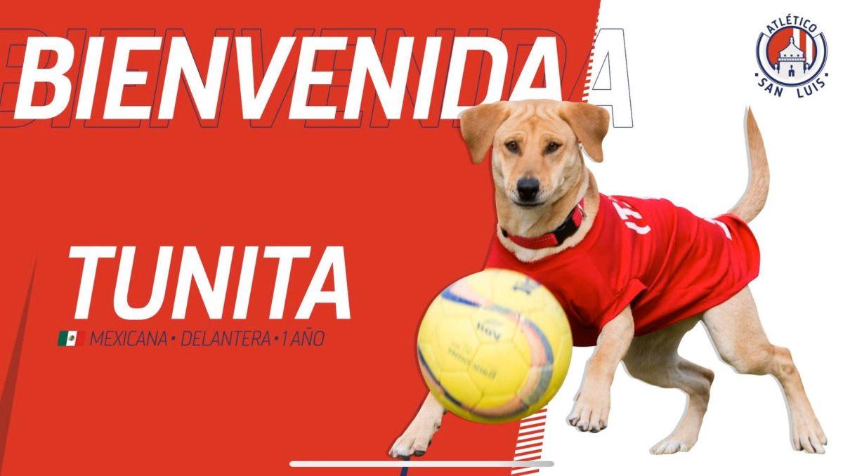 'Tunita' apareció por primera vez en el duelo de la jornada 2 entre San Luis y Cruz Azul.