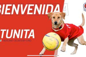 ¡Refuerzo perrón! Atlético de San Luis anunció 'fichaje' de Tunita ¡y ya metió sus primeros goles!