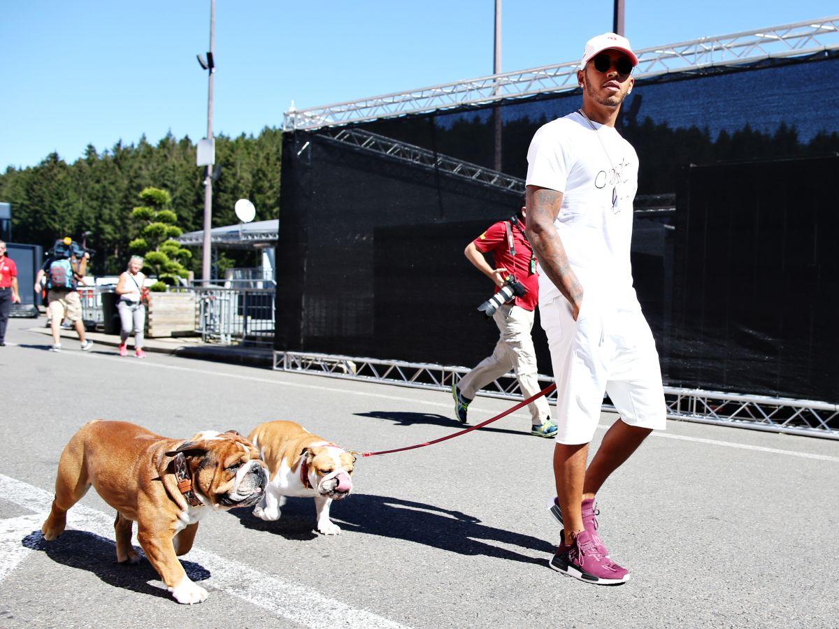 Lewis Hamilton tiene dos bulldogs.