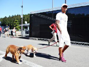 ¡Lo ama! Lewis Hamilton compró unos zapatos para su bulldog y luce adorable