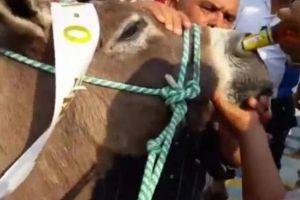 Obliga a un burro a beber cerveza por la nariz, las redes arden con las imágenes