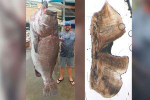 Pescan un gigantesco pez de 350 libras en Florida