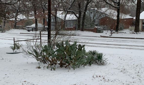 La Nieve Llego Al Norte De Texas Despues De Las Tormentas La Opinion