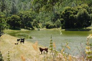 Rancho del norte de California podría convertirse en parque estatal