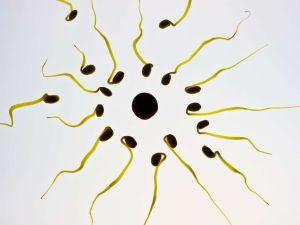 Sustancia presente en los plásticos causa problemas de fertilidad