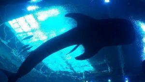 Aguantó el frío y el sacrificio valió la pena: pescó dos enormes tiburones en Texas
