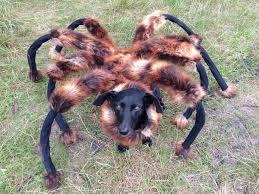 Disfraza a su perro de araña gigante y asusta a todo el vecindario, ¡es viral!
