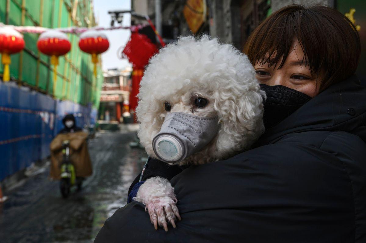 Hasta el momento, no se ha comprobado que los perros transmitan la enfermedad.