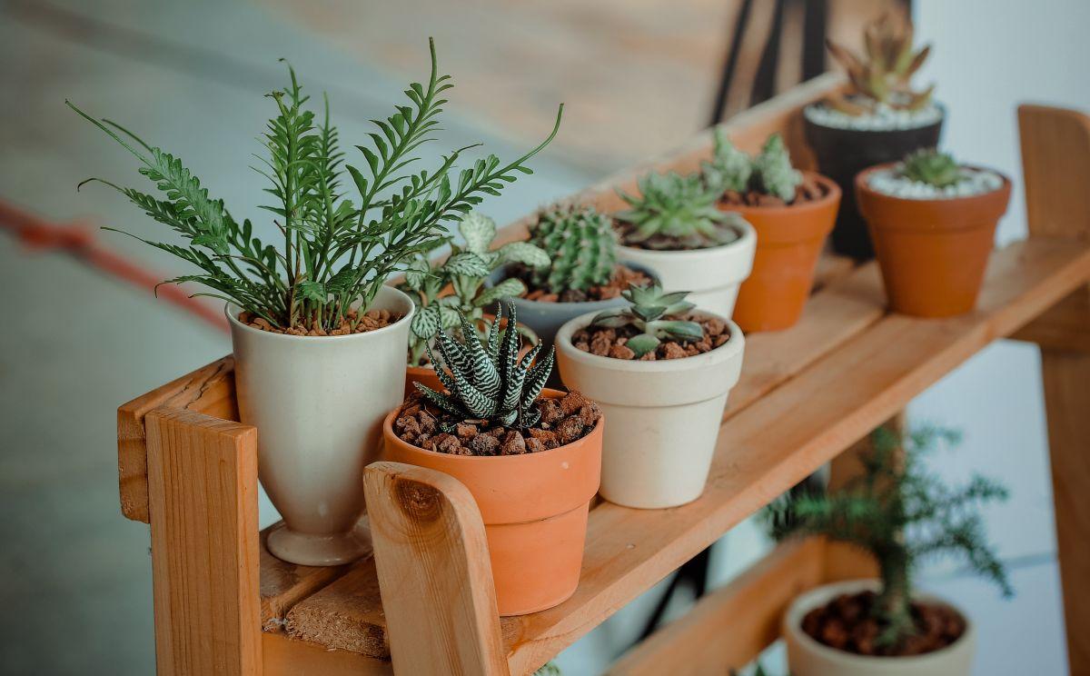 Las plantas permiten el flujo de energía positiva.