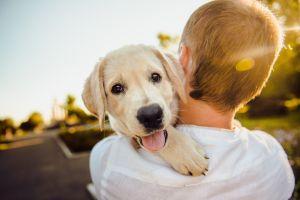 Tips para proteger a tus mascotas del sol