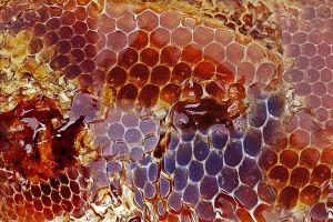 ¿Qué es la miel de manuka y cuáles son sus beneficios?