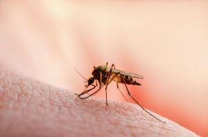 ¿Cómo se transmite el virus Zika y cuáles son sus síntomas?