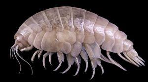 El sorprendente descubrimiento en lo más profundo del océano de una especie con partículas de plástico en su organismo
