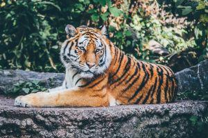 5 destinos para aquellos amantes de los animales