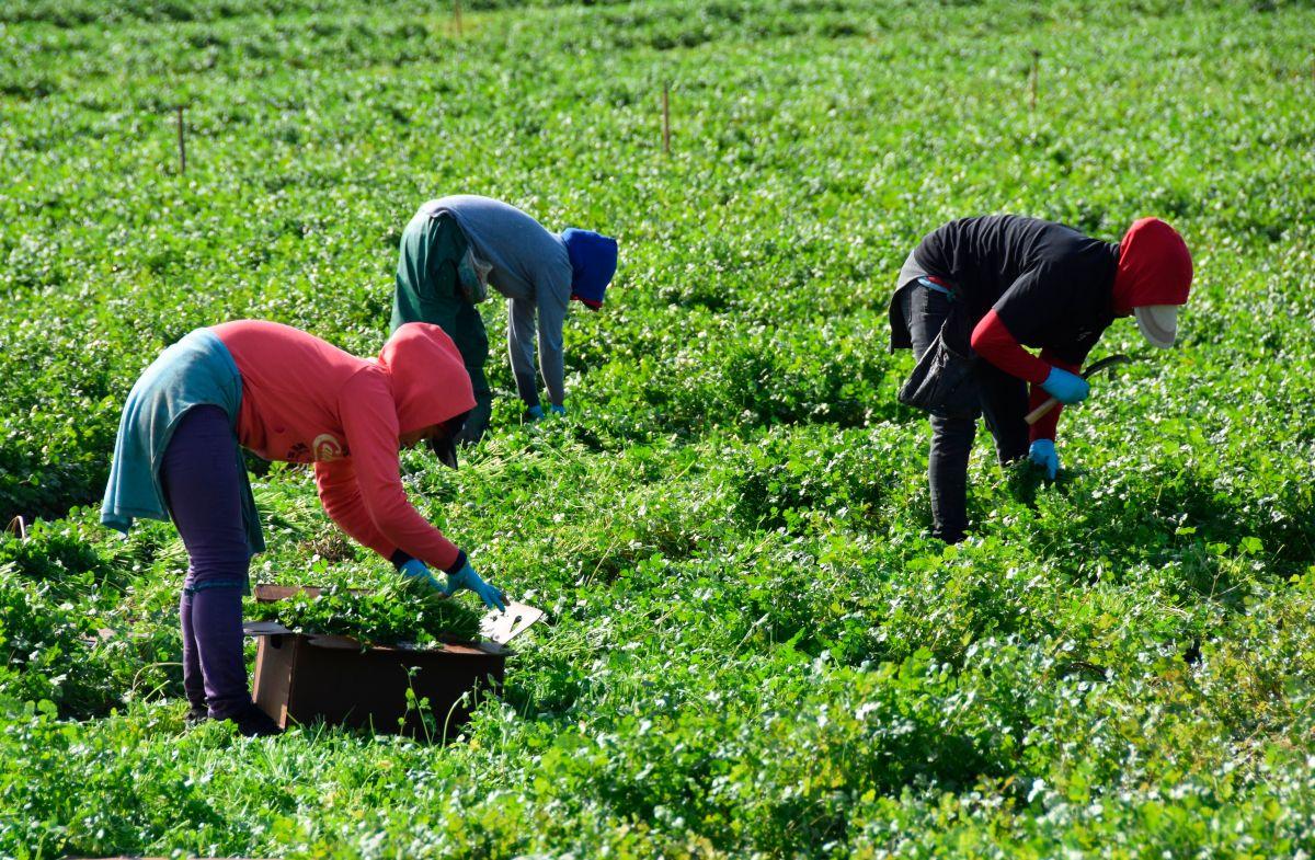 Los trabajadores agrícolas de California continúan sus labores en medio de la pandemia.