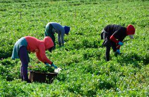 Campesinos piden se reconozca el empleo esencial que realizan durante la pandemia para una legalización