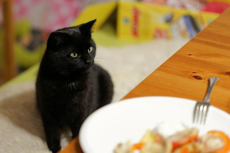 alimentos prohibidos para un gato