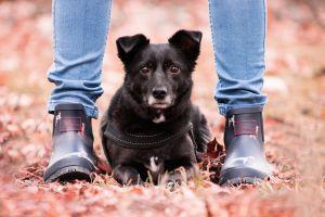 10 errores que los dueños de mascotas deberían evitar